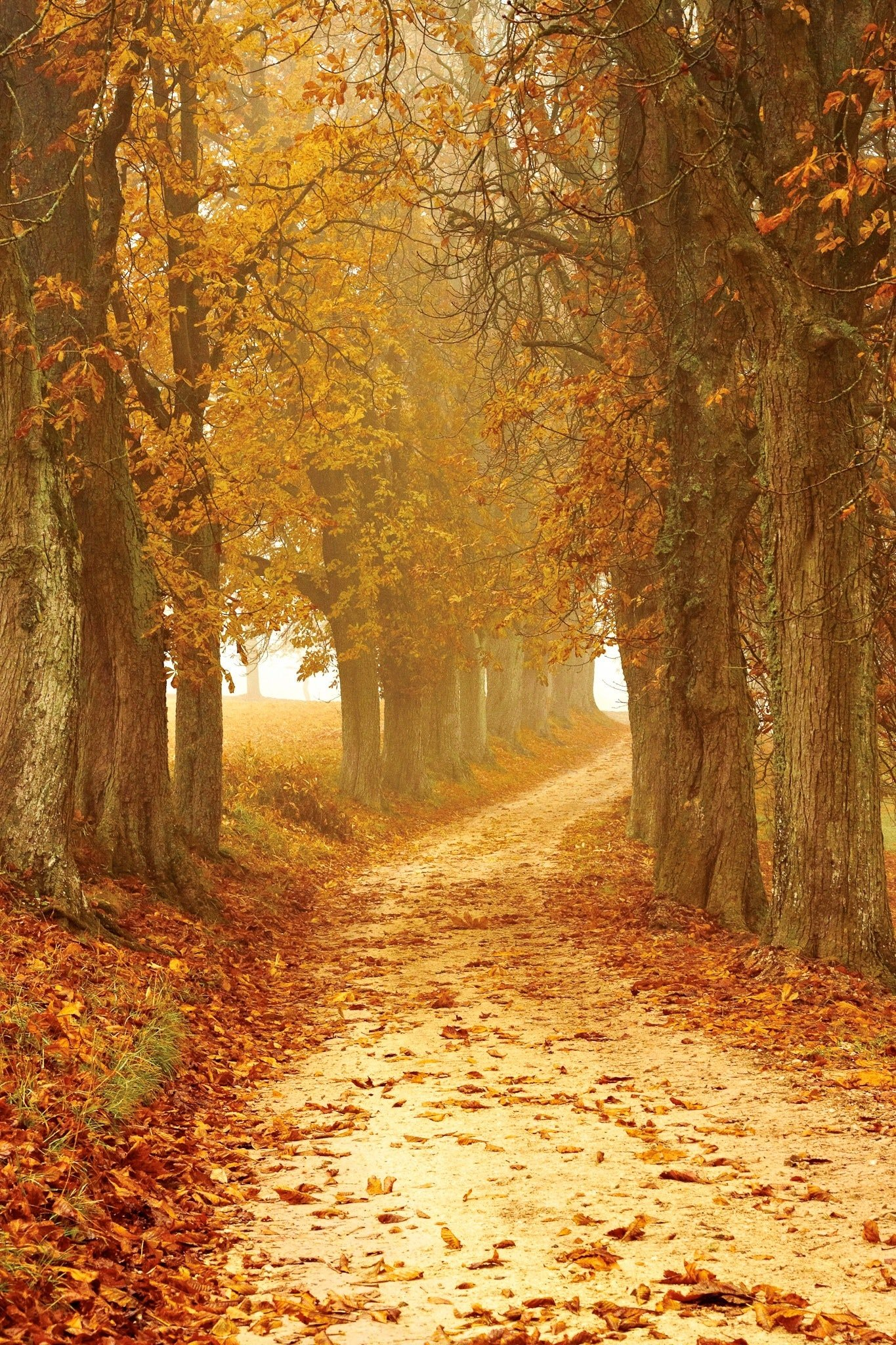 Autumn-forest-sunshine