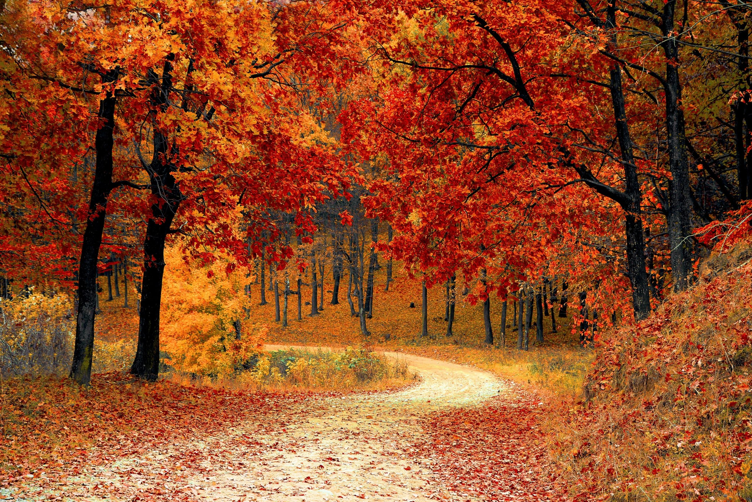 Autumn-red-leaves