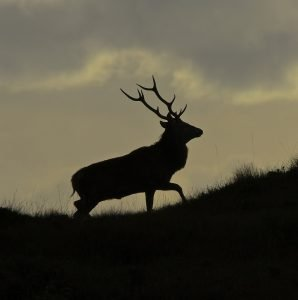 Read more about the article Our guide for each season in the Scottish Highlands