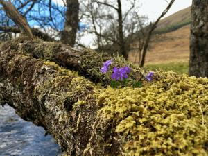 Spring towards the Sunshine