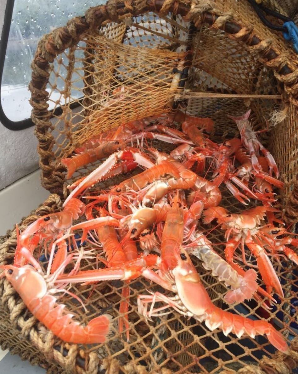 West coast langoustines and fresh seafood daily