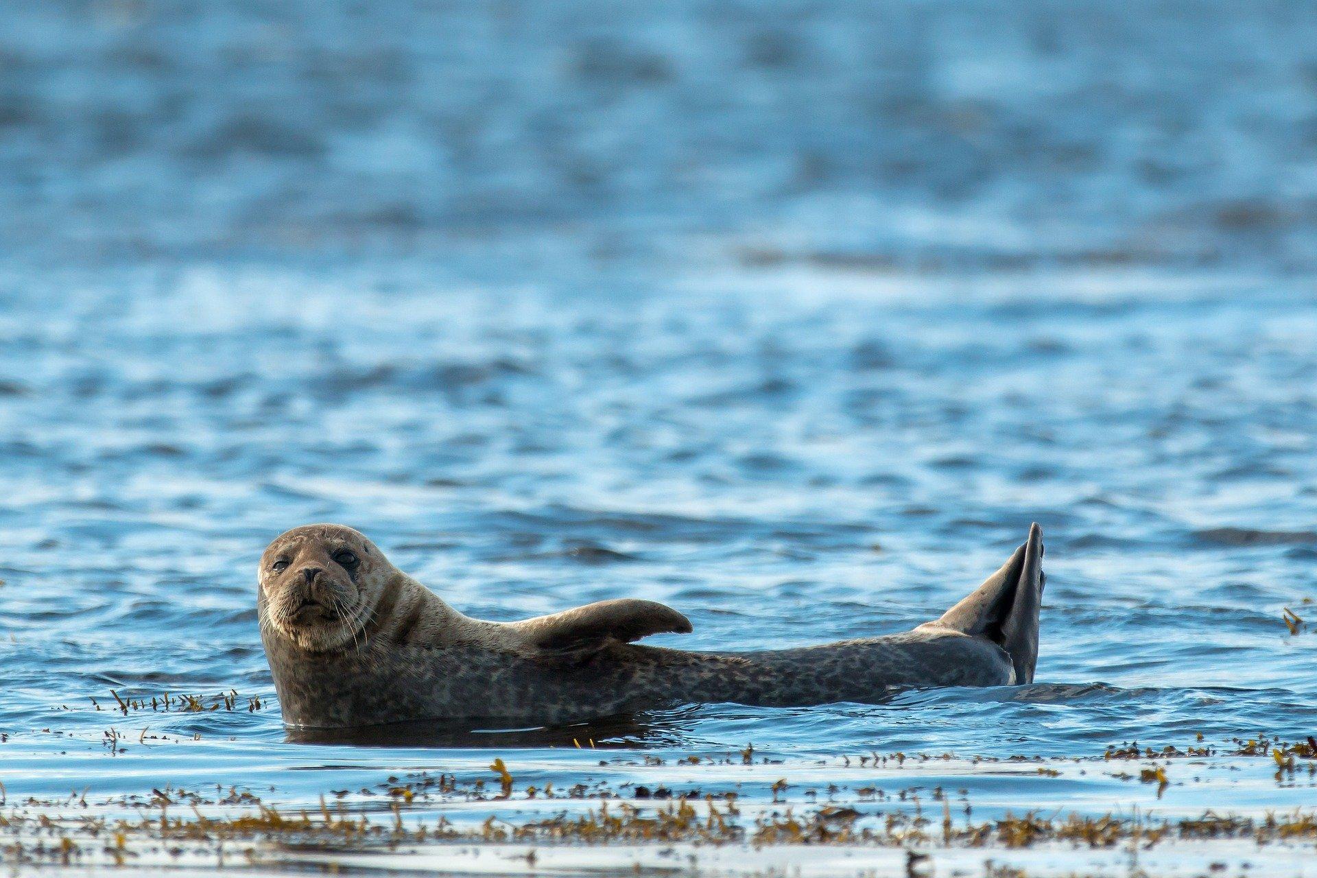 Sea animals - seals