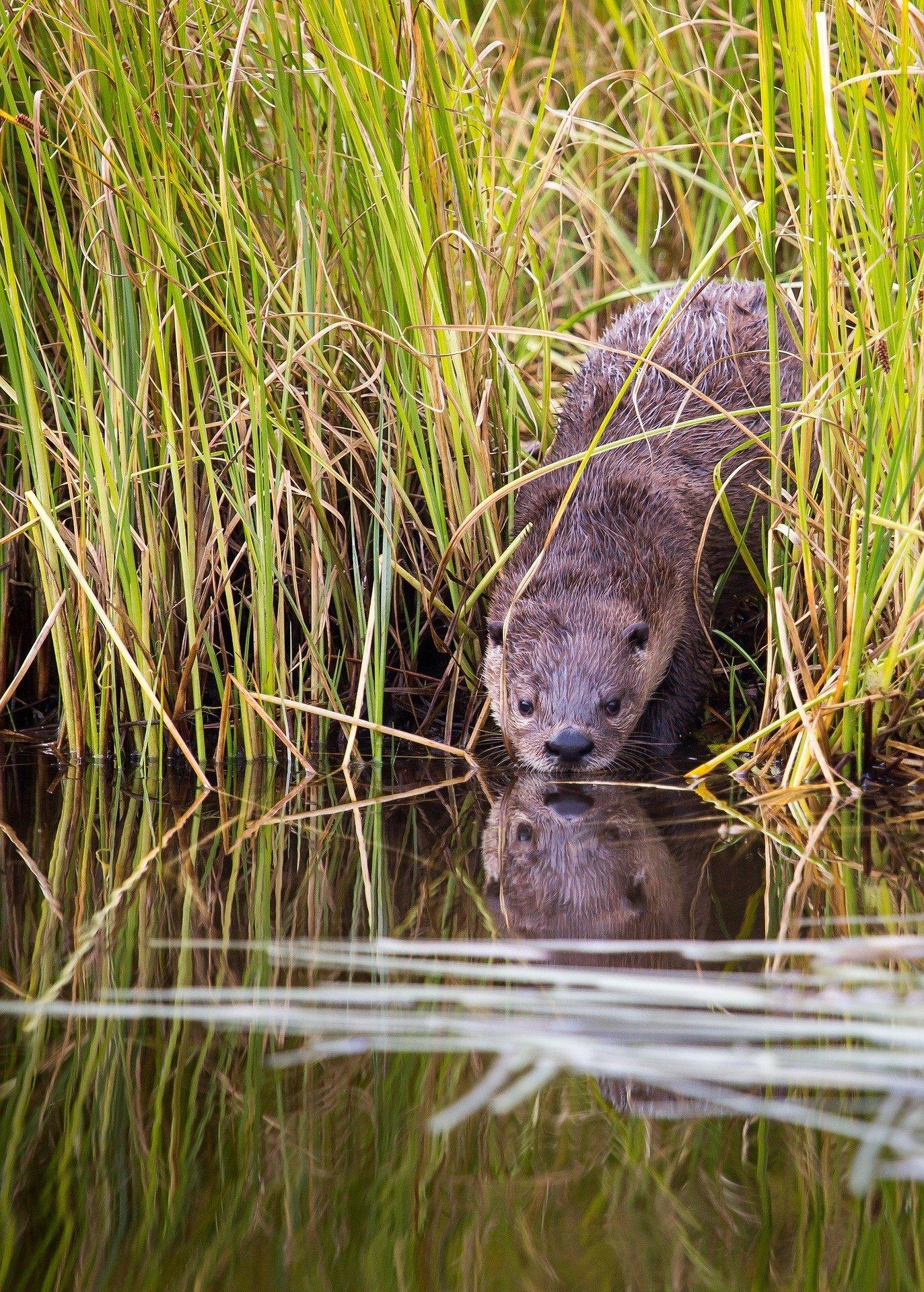 Sea animals - otters