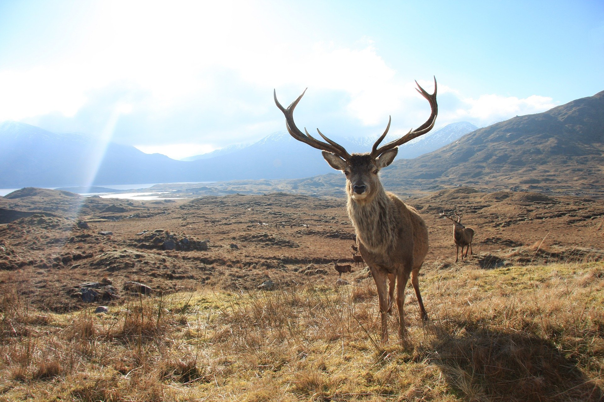Stalking and hunting deer